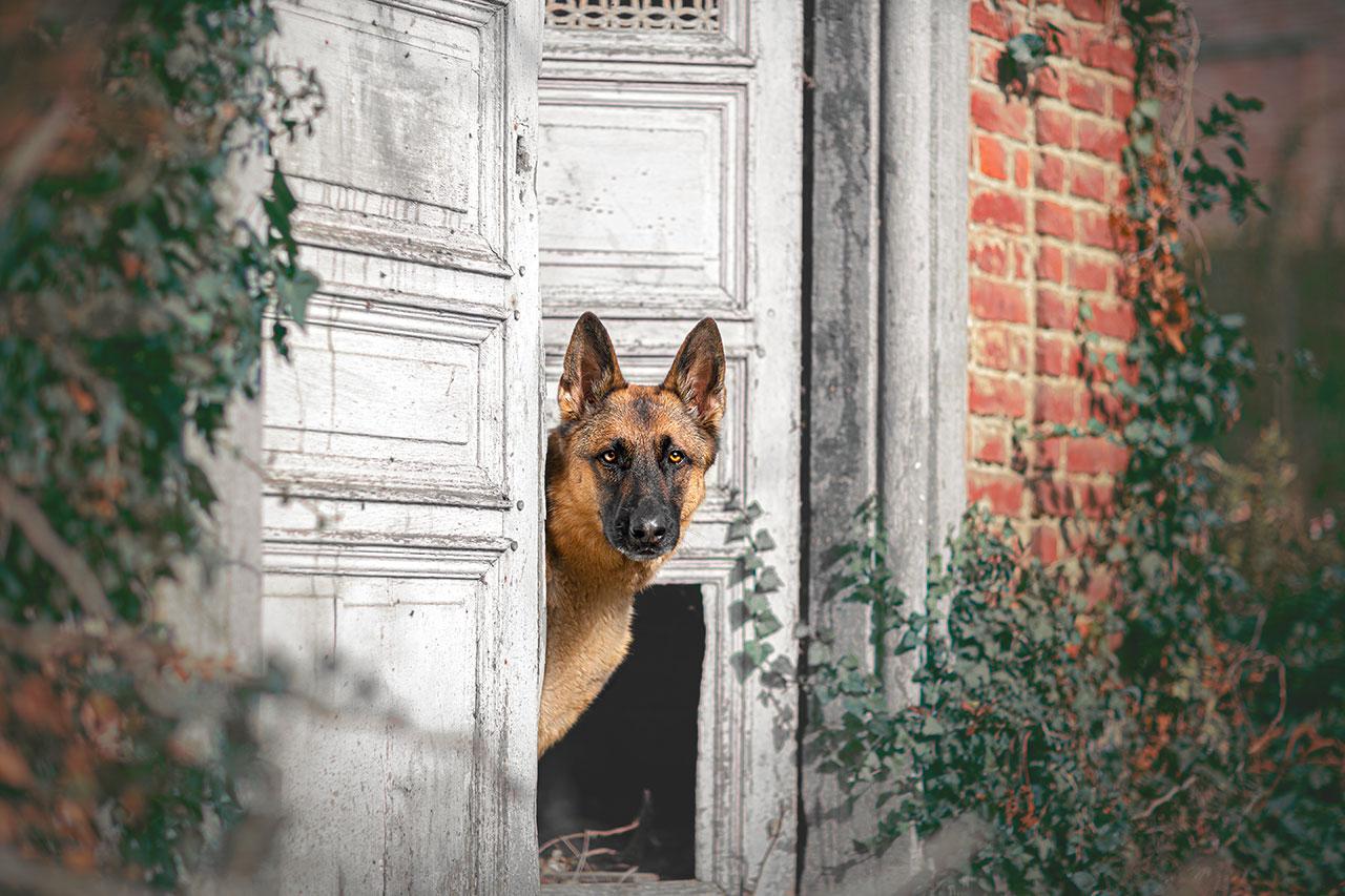Timilky photographe animaux domestiques Gembloux