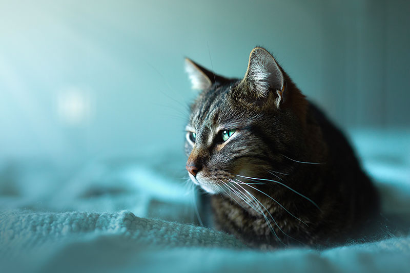 Chat Timilky Photographie